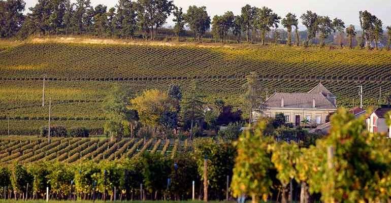 Côte de Blaye, les vignes