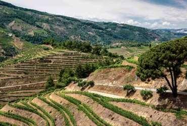 Les terrasses de la vallée du Douro