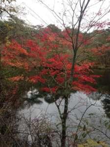 Les paysages splendides du Japon au bout du guidon