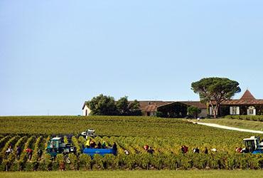 Vendanges vins de Bordeaux
