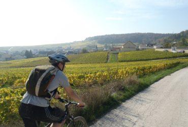 Homme à velo dans les vignes en alsace Abicyclette Voyages à vélo