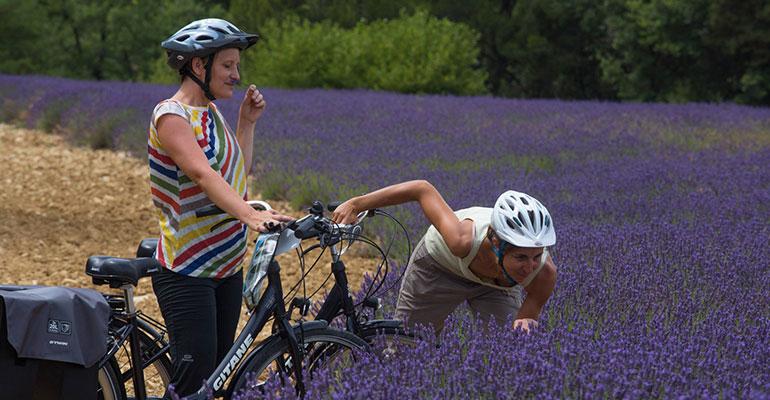 2 femmes à vélo dans les champs de Lavande