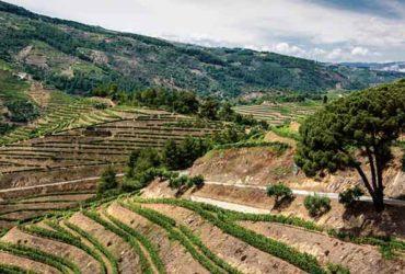 Vignes en terrasse Vallée du Douro Abicyclette Voyages à vélo