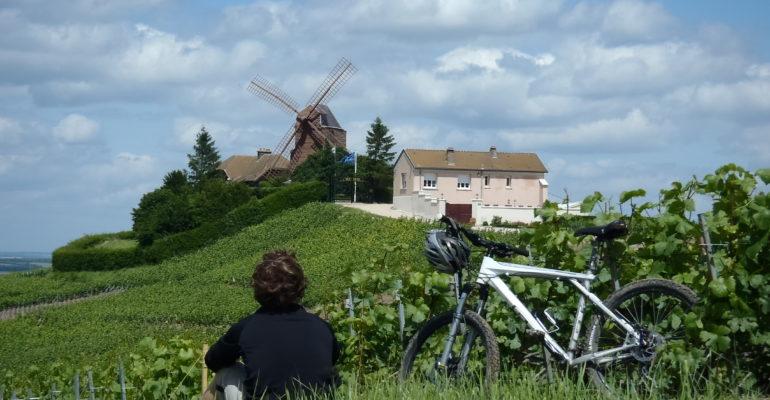 Homme à VTT contemplant un moulin au milieu des vignes Le Tour de la Montagne de Reims Abicyclette Voyages à vélo