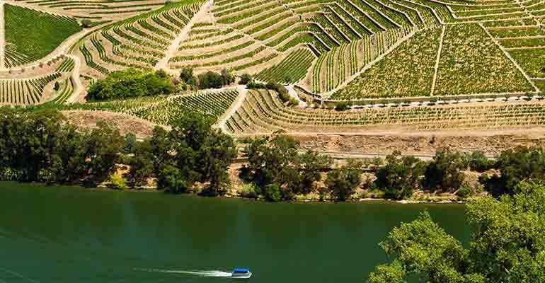 Vallée de la rivière Douro bordée de vignes