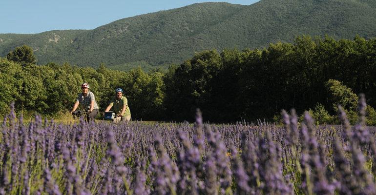 Couple à vélo traverse un champ de lavande Le petit tour du Luberon Abicyclette Voyages à vélo