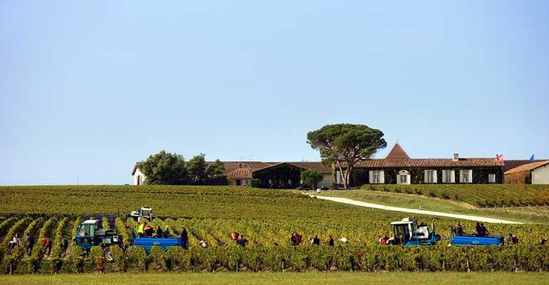 Vendange dans la région de Bordeaux
