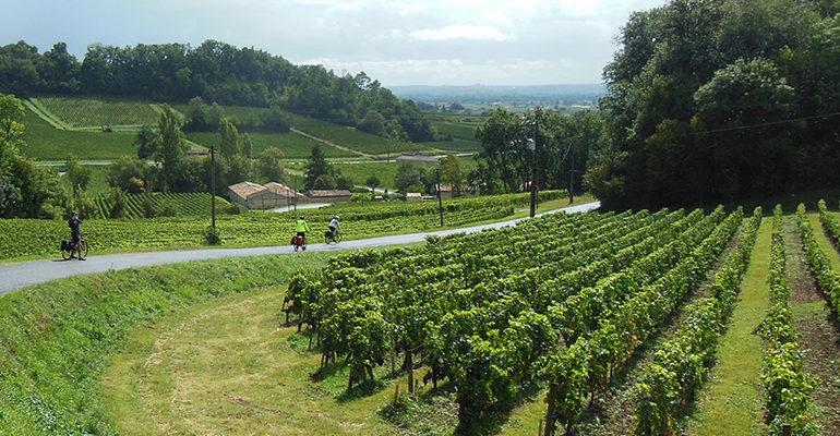 Cyclistes dans une descente le long de vignes du Bordelais