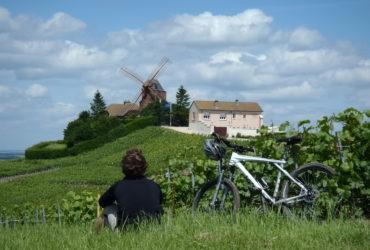 Cycliste assis au milieu des vignes regardant moulin La Champagne à vélo