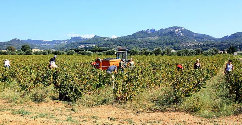 Groupe de vendangeurs et tracteurs dans les vignes Vaucluse vacances à vélo