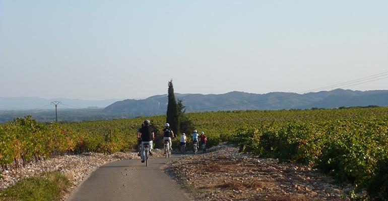 Groupe de cyclistes au milieu des vignes de Provence