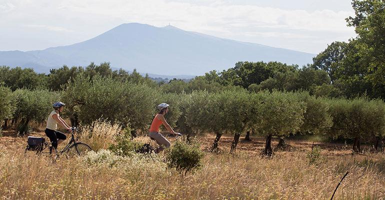 2 cyclistes au milieu des oliviers, vacances à vélo en Provence