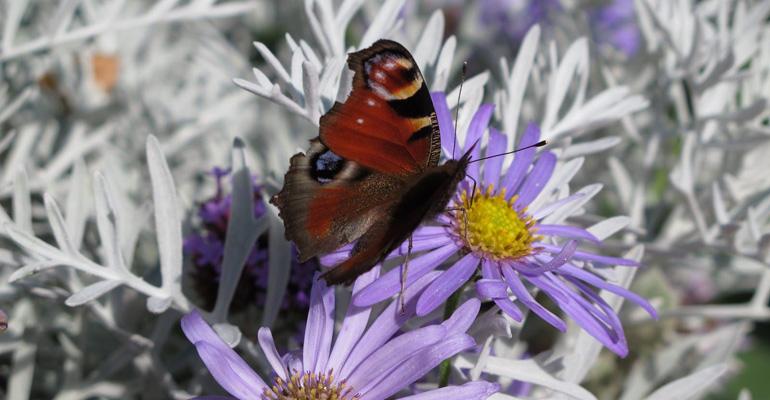 papillon posé sur une fleur chaumont sur loire séjour à vélo