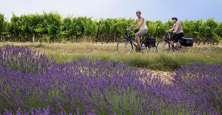 2 cyclistes entre vignes et champ de lavande vacances à vélo en Provence