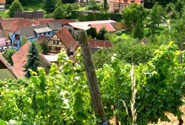 Route des vins à vélo