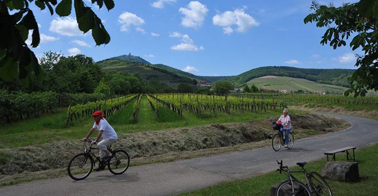 Cyclistes qui pédalent au coeur des vignes alsaciennes
