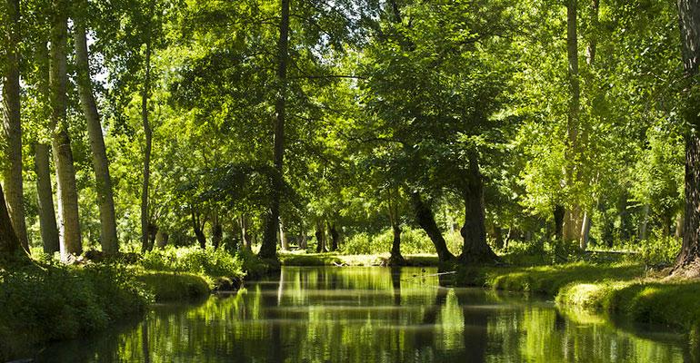 le marais poitevin, arbres, canal